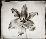 Collodion Wet Plate Ambrotype Tintype 027
